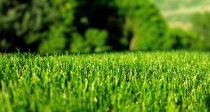 Создаем газон на зависть всем соседям.